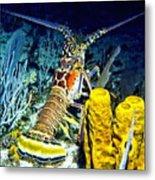 Caribbean Reef Lobster Metal Print