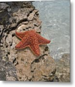 Caribbean Starfish Metal Print
