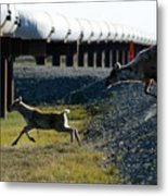 Caribou Cow And Fawn Metal Print