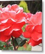 Carmel Mission Roses Metal Print