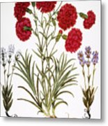 Carnation & Lavender, 1613 Metal Print