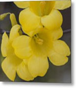 Carolina Jessamine Metal Print