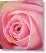 Carolina Rose Metal Print