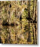 Carolina Swamp Metal Print