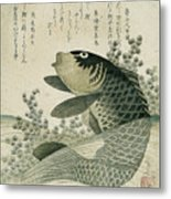 Carp Among Pond Plants Metal Print
