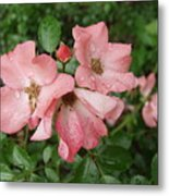 Carpet Roses Metal Print