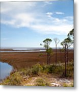 Carrabelle Salt Marshes Metal Print
