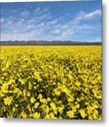 Carrizo Plain Desert Sunflower Field Afternoon Metal Print