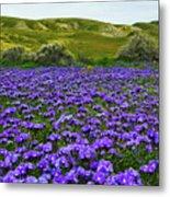 Carrizo Plain National Monument Wildflowers Metal Print