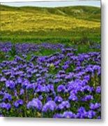 Carrizo Plain Wildflowers Metal Print