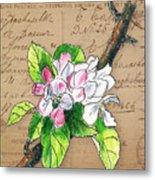 Carte Postale. Blossoming Apple Metal Print