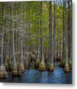 Carvers Cypress Metal Print