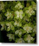 Cascading White Blossoms 2 Metal Print