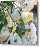 Cascading White Roses Metal Print