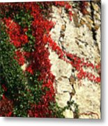 Castle Vines Metal Print