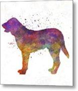 Castro Laboreiro Dog In Watercolor Metal Print