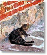 Cat Against Stone Metal Print