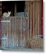 Cat And Barn Metal Print