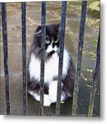 Cat At The Gate Metal Print