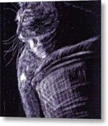 Cat At The Window Metal Print
