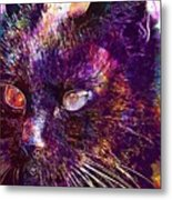 Cat Black View Close  Metal Print