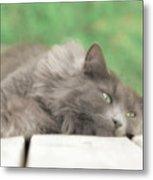 Cat Chillax Metal Print