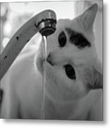 Cat Drinking Water From Faucet Metal Print by A*k
