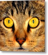 Cat Face Portraiture Metal Print