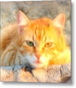 This Cat Has Been Waiting A Long Time For The Mouse  Metal Print