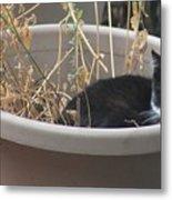 Cat In Flower Pot. Metal Print