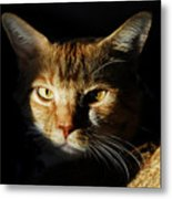 Cat In Shadow Metal Print