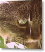 Cat In Sunlight Metal Print