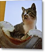 Cat In The Roof Metal Print