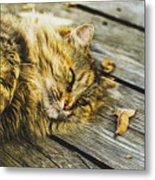 Cat Lie Wood Floor Metal Print