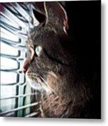 Cat Looking Out Window Metal Print