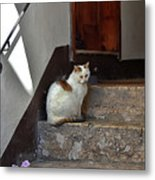 Cat On Steps Metal Print
