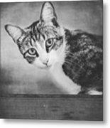 Cat Portrait 4 Metal Print