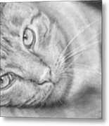 Cat Portrait Metal Print