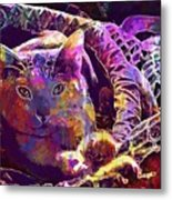 Cat Purr Kitten Pet Fur Feline  Metal Print