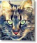 Cat Simba Metal Print