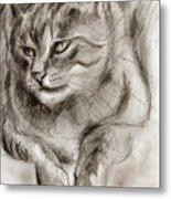 Cat Study Drawing No One Metal Print