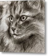 Cat Study Drawing No Two Metal Print