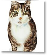 Cat Watercolor Illustration Metal Print
