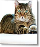 Cat With Bright Eyes Metal Print