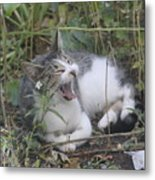 Cat Yawning In The Garden Metal Print