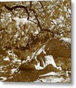 Catalpa Reflections Metal Print