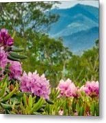 Catawba Rhododendron At The Craggy Metal Print