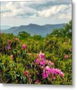 Catawba Rhododendrons Metal Print