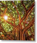 Catch A Sunbeam Under The Banyan Tree Metal Print