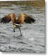 Catch Me If You Can Metal Print